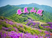 【好名声网】最美山花(下)(刘文艳)