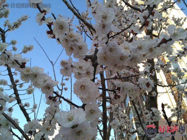 【好名声网】朝阳四月,忽然春天(刘莉)