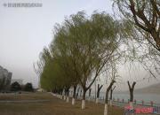 【好名声网】河边那片柳树林哟(曲廷清)