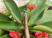 螳螂(三)(姚玉民)