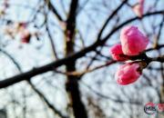想把春天寄向远方(张福艳)