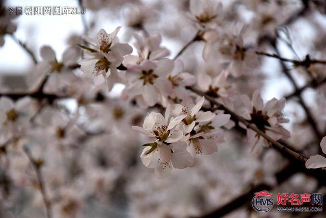 【好名声网】花与果的距离(李玉霞)