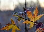 【好名声网】秋季最后一个节气——霜降还有哪些农事?(史庆友)