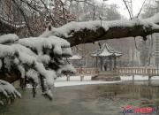 【好名声网】远亲不如近邻——雪中情(时春华)