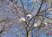 【好名声网】一片桃花林(周显梅)
