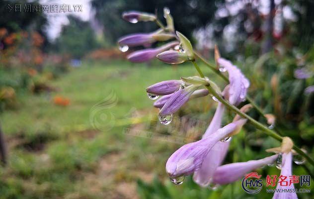 浪漫的雨季(刘莉)