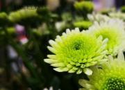 【好名声网】用一双慧眼发现春天的意义(王铁兰)