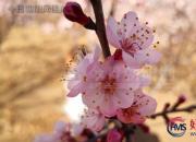 【好名声网】聆听春的声音(刘莉)